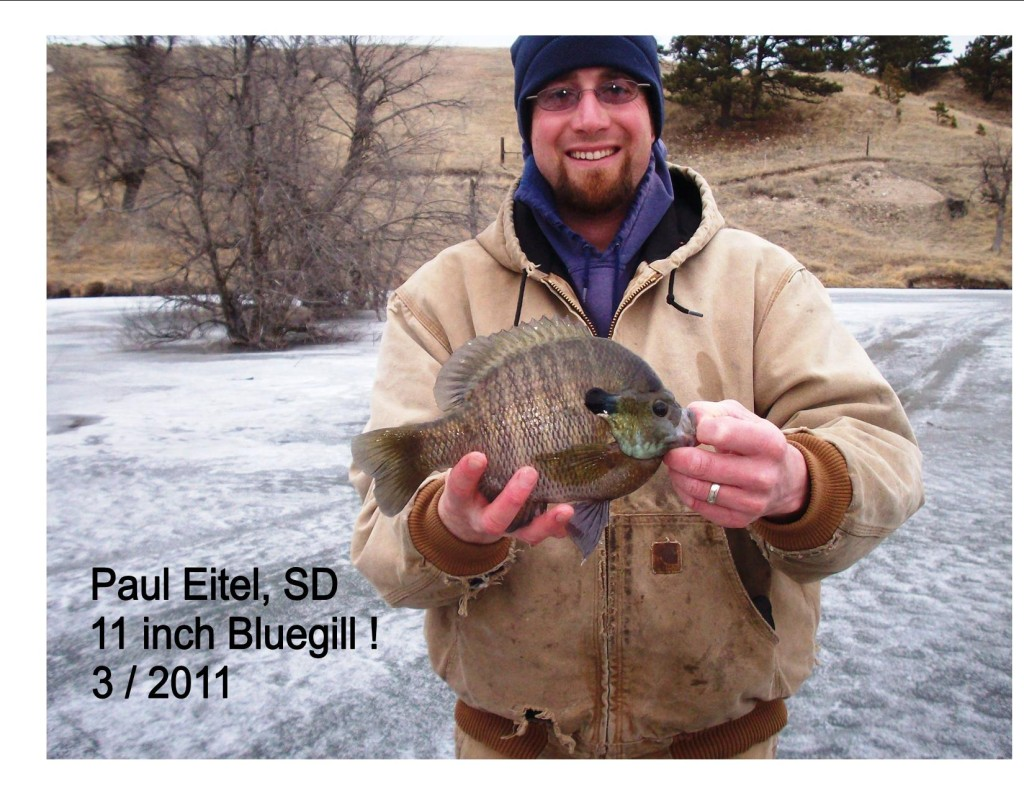 Our largest bluegill to date!